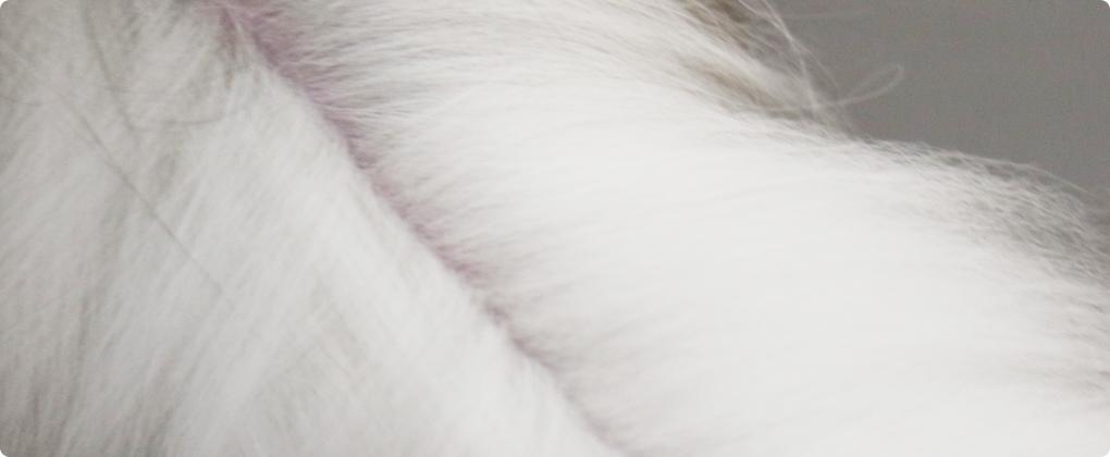 健康面でも衛生面でも重要な猫ちゃんのスタッドテイルも綺麗に